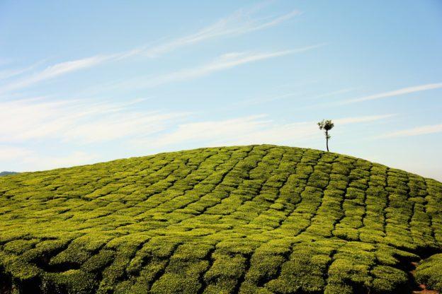 agricultura tecnologia